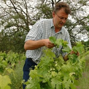 Daniel Le Conte des Floris dans ses vignes